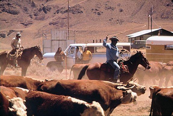 Pyramid Lake Indian Reservation Paiute Spring Roundup