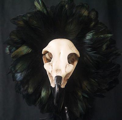 closeup of eagle skull