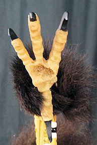 closeup of eagle foot