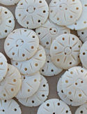 Buffalo Bone Buttons