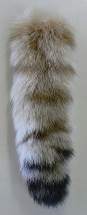 lynx tail or bobcat tail