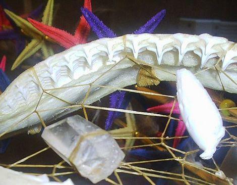 shark teeth detail