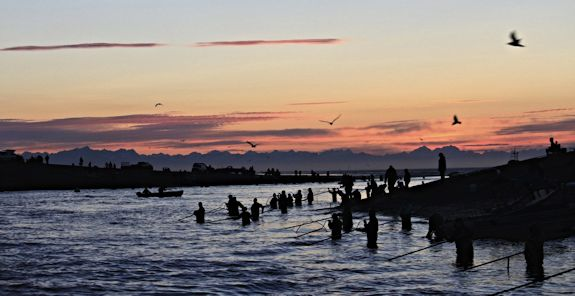 As the sunrises, a large group of people stand in a river with large nets trying to catch fish.