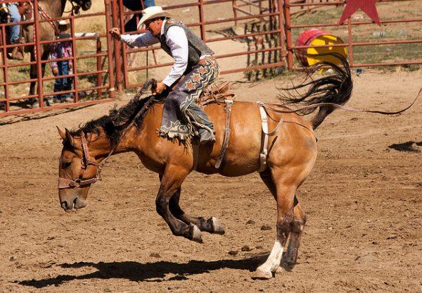Bronc riding at the Crow Fair Rodeo